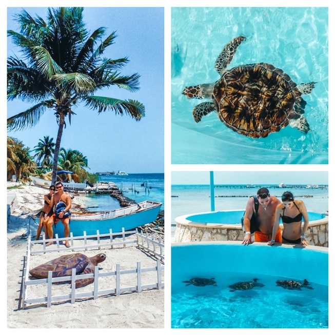 One of the best things to do in Isla Mujeres is visiting the Turtle farm because it`s a sanctuary where you can get up close to all different size of turtles. Besides, the turtle farm is a source of pride for the locals. The farm also protects the turtles.