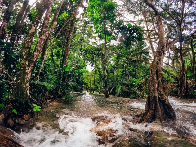 Dunns River Fall in Ocho Rios, Jamaica: a magnificent cascade of multiple tiers, ending in the sea. Therefore, it is one of the top attractions in Ocho Rios.