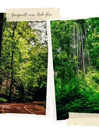 rainforest near Ocho Rios: Fern Gully is a perfect escape from busy Ocho RIos