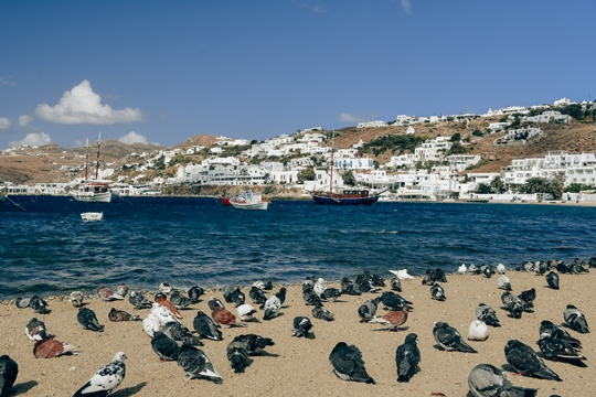 things to do in Mykonos: Old Harbour in Mykonos town is a place where you can spot Petros the Pelican (the mascot of Mykonos). The old harbour with moored yachts in the distance is a popular place to visit in Mykonos.
