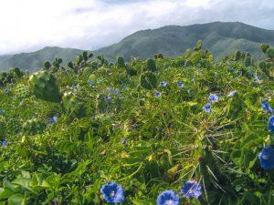 flora in Venezuela