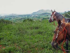 Isla Margarita Venezuela things to do: Horseback riding is one of the best things to do in Isla Margarita in Venezuela because it is an unforgettable experience both for beginners and experts. The visitors can choose horseback riding on the beach or over the mountains.