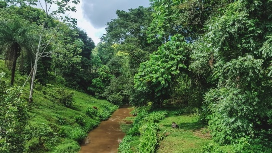 things to do in Tobago: Main Ridge Forest Reserve is an unforgettable thing to see in Tobago, because this is truly is an oasis compared to the south of the island. Besides, the rainforest is protecting many endemic species that originated in mainland South America.