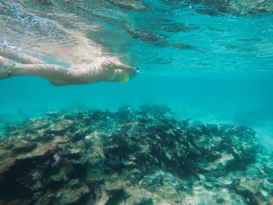 reefs snorkeling on the island