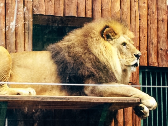 things to do in Bojnice: The oldest zoo in Slovakia is one of the popular attractions in Bojnice, especially if you visit with children. You can find Zoo Bojnice in the forest park, overlooking Bojnice Castle.