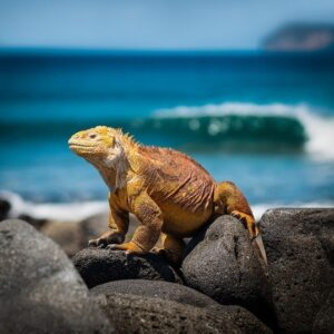 travel around the world quiz -galapagos