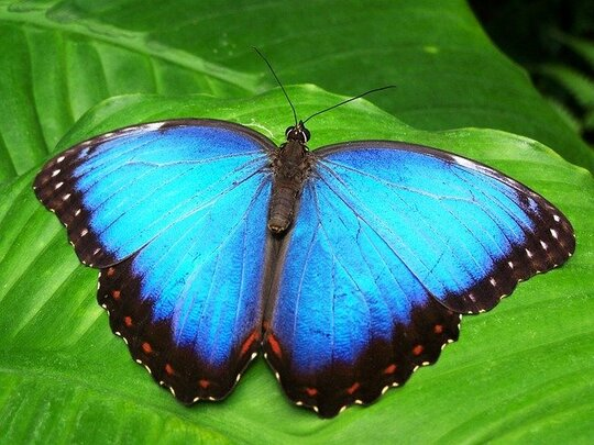 things to do in Stratford upon Avon: Stratford is home to the UK's largest tropical butterfly attraction. Therefore, make sure you visit the Butterfly Farm when in Stratford with children.