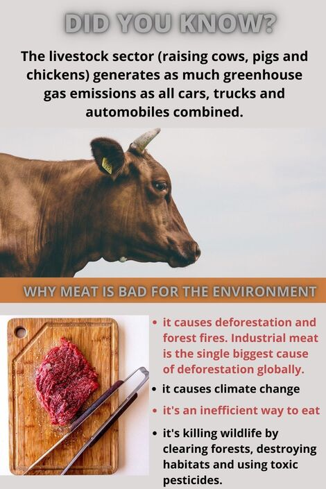 ditch meat