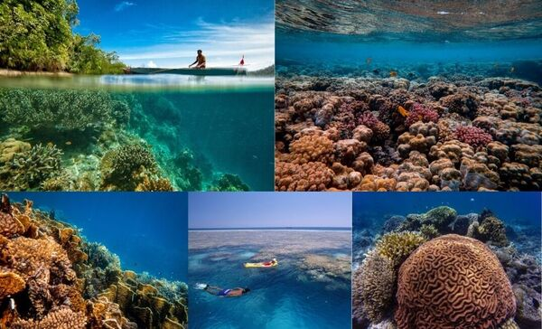 take care of environment when snorkeling and diving