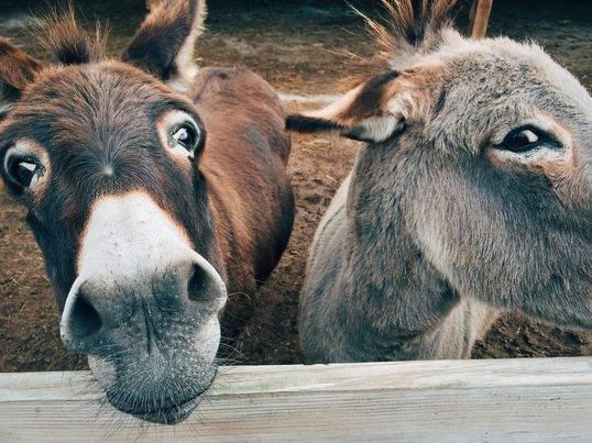 Donkey's Sanctuary looks after injured and sick donkeys struggling during a drought on the island.