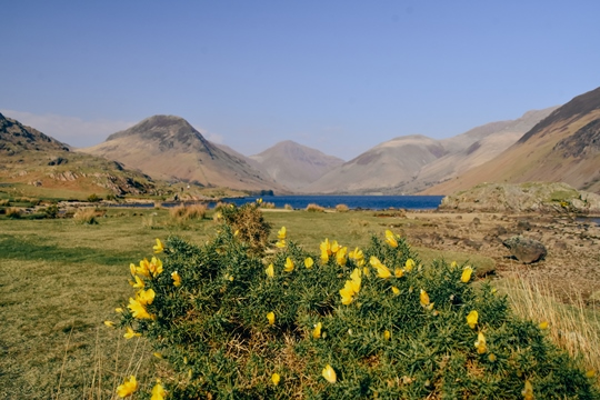 Lakes in the Lake District: If you are planning to explore the Lake District, then visiting Wastwater should be on the top of your list. With its unique towering peaks reflected in the glistening lake, it is no wonder that Wastwater is one of the most beautiful lakes in the Lake District.