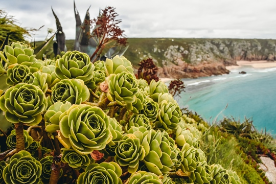 A county on England's southwestern tip has some spectacular sights, and it would be a shame to miss them out. Golden beaches that stretch on for miles, legendary castles, lost gardens and the largest indoor rainforest in the world are just some of them.